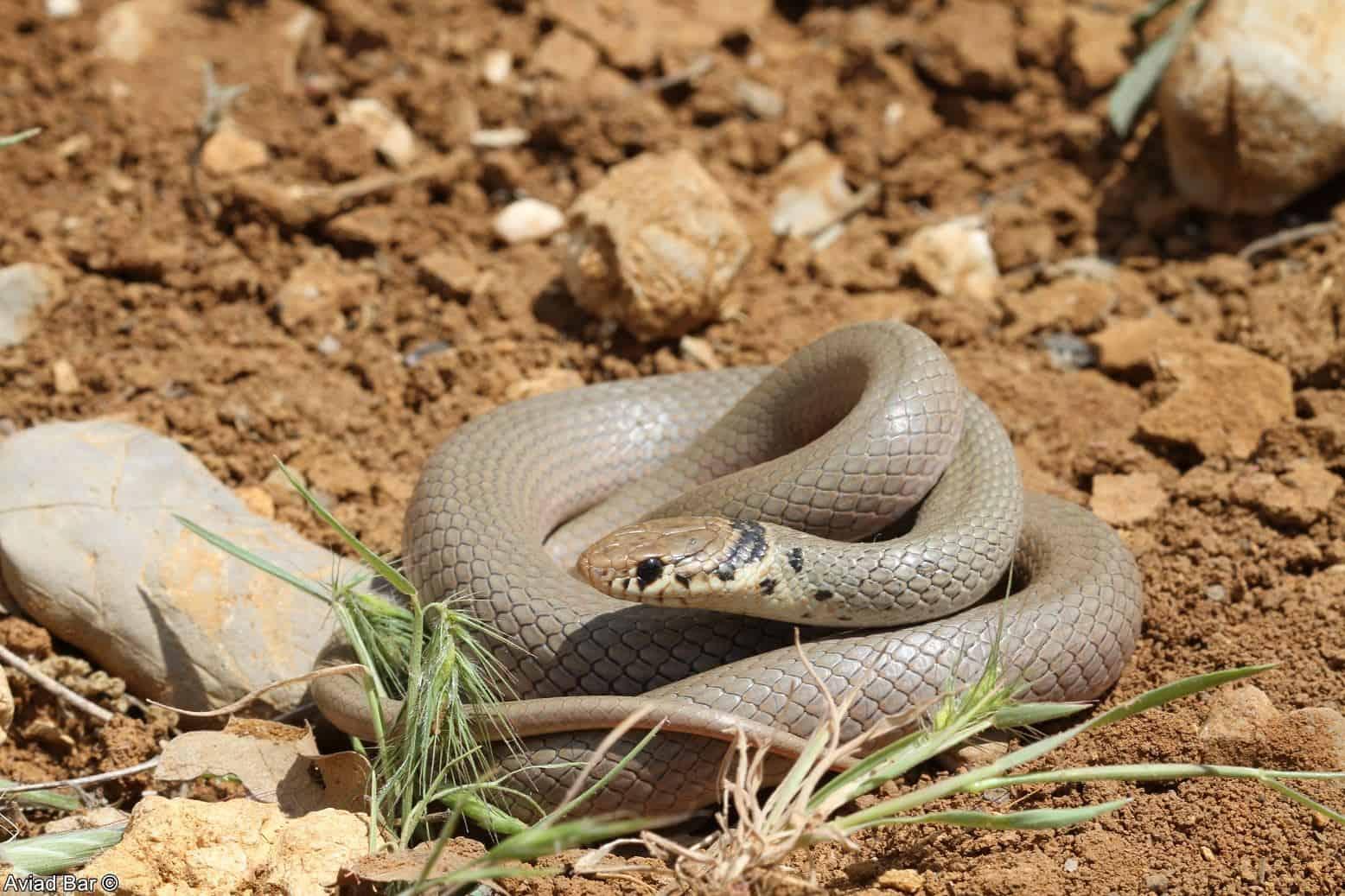לא כולם רעים: הנחשים שלא מהווים סכנה לסביבה