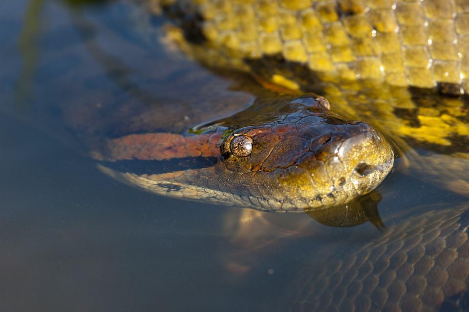 הנחשים הגדולים בעולם