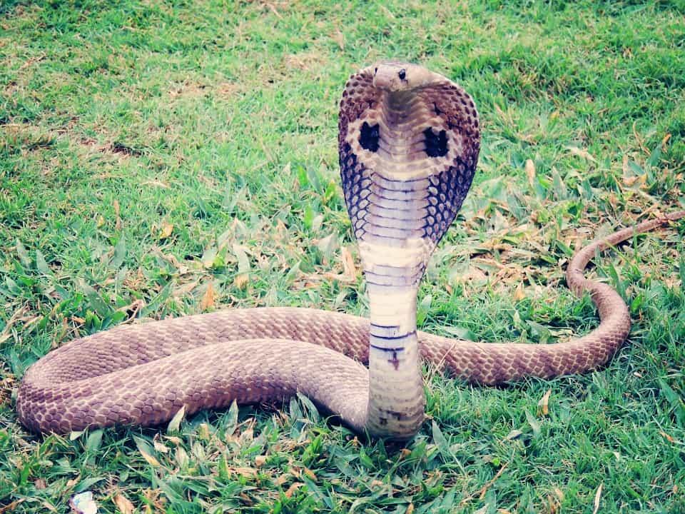 הנחשים הכי ארסיים בעולם