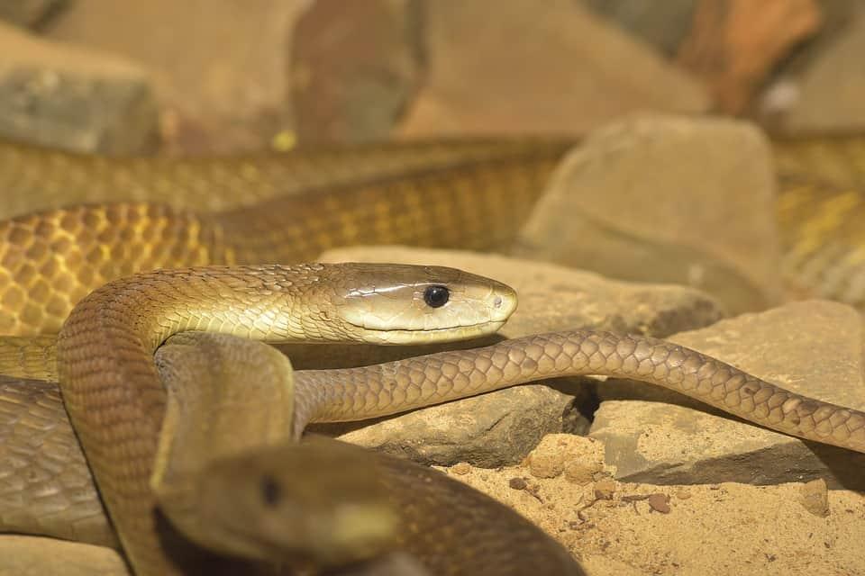 עובדה או מיתוס? פרטים מעניינים בעולם הנחשים