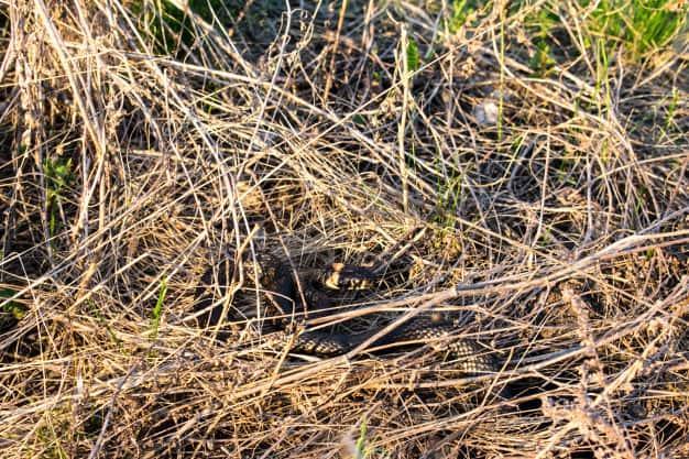 כך תמנעו מנחשים להתקרב לחצר שלכם